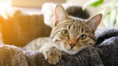 Ti spieghiamo perché e quando i gatti fanno le fusa