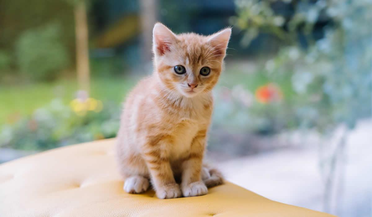 Come svezzare un gattino