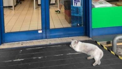 Chicca è la gatta del supermercato di San Marino