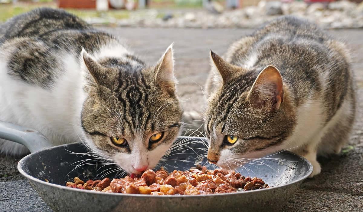 Una guida per capire qual è la ciotola giusta per il tuo gatto
