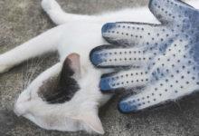 miglior guanto per togliere peli del gatto