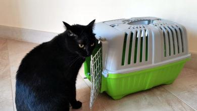 Recensione del trasportino per gatti LazyBones