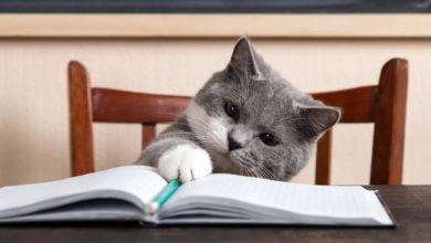 Utili consigli su come educare un gatto