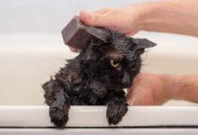Consigli utili per chi si appresta a lavare un gattino