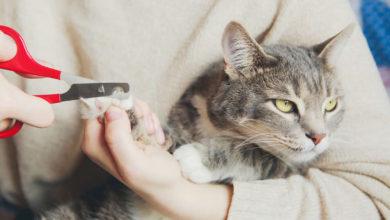 Un'utile guida per capire come tagliare le unghie al vostro micio