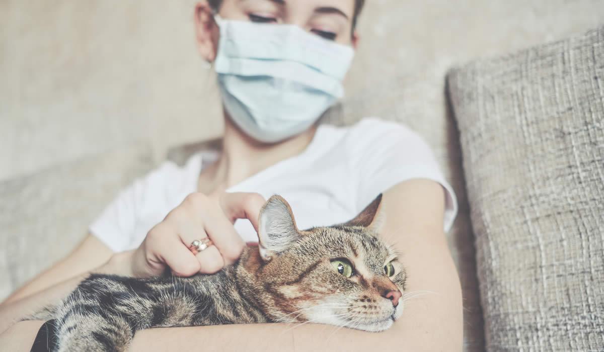 Coronavirus nel gatto, non solo Covid-19