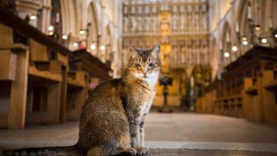 Doorkins Magnificat, la gatta della cattedrale di Londra