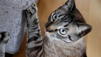 Come scegliere il disabituante per il gatto