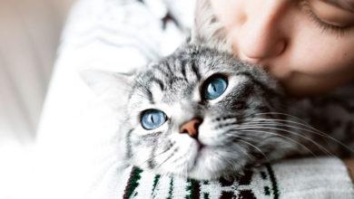 Interpretazione del sognare gatti