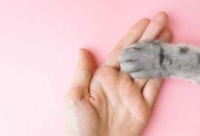 Anatomia del gatto: zampine e gommini