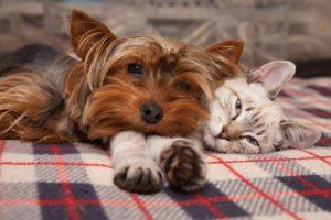 immagini cuccioli cani e gatti