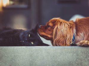 gatti e cani foto