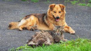 foto di gatti e cani cuccioli