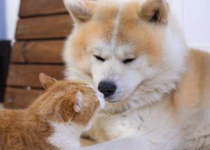 foto cuccioli cani e gatti