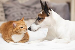 immagini cani gatti