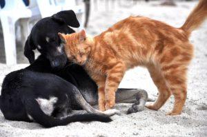 immagini di cani e gatti insieme