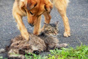 foto di cani e gatti insieme