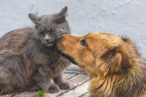 immagini cane e gatto
