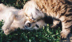 foto cani e gatti insieme