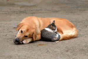 cani e gatti immagini