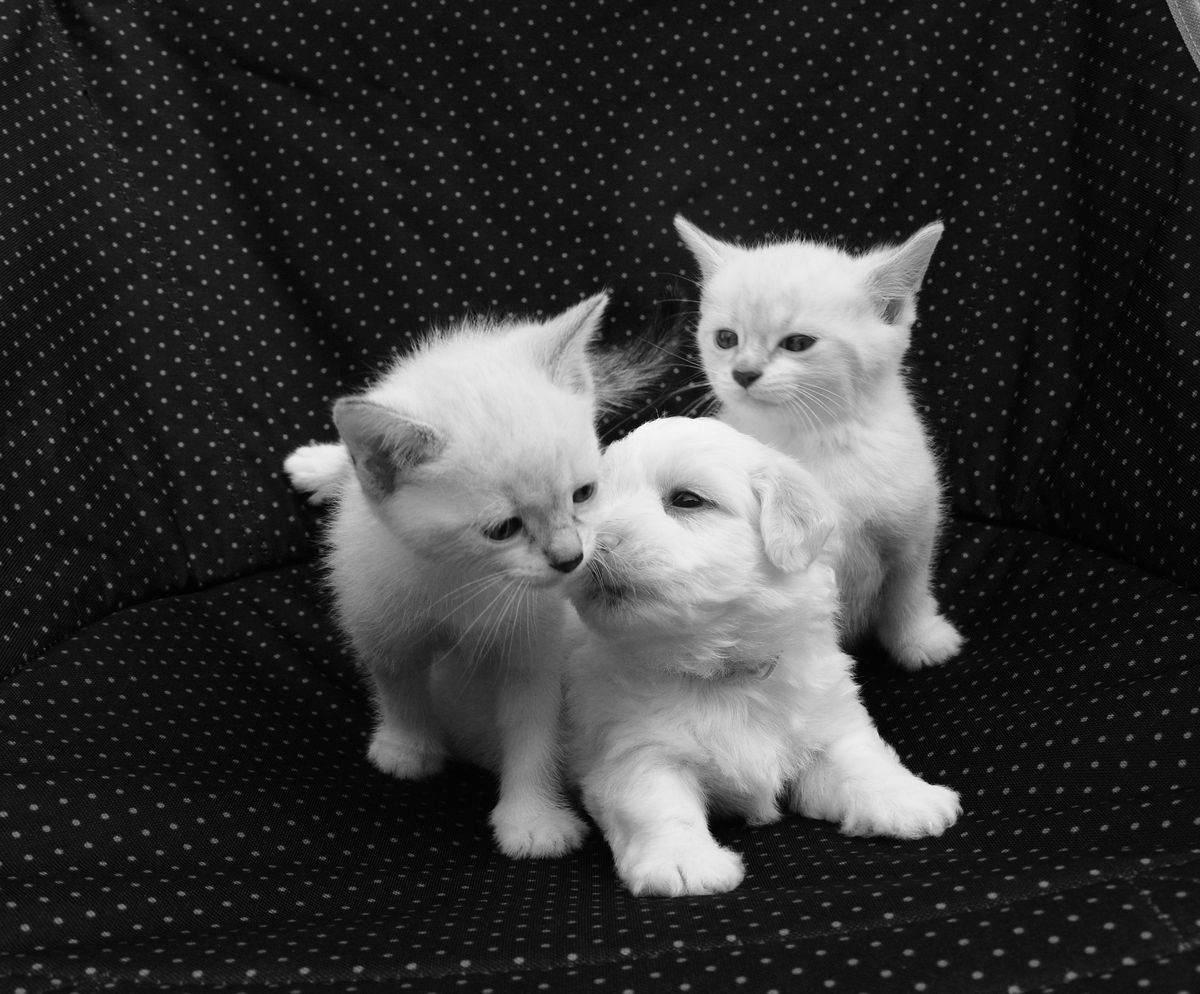 immagini di cani e gatti cuccioli