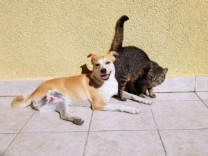 immagini di gatti e cani