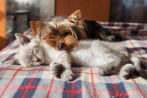 foto cani e gatti