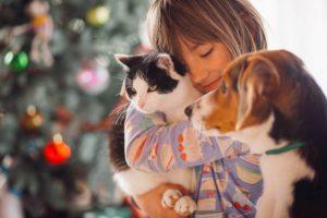 immagini di cani e gatti