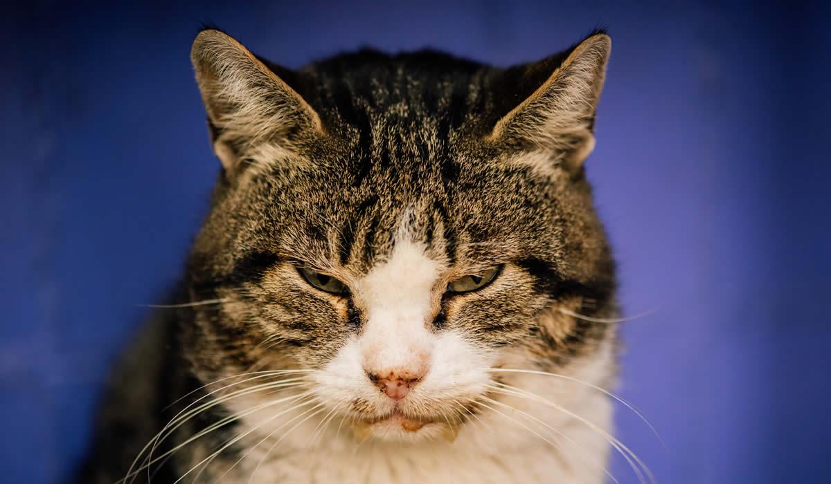 Informazioni sull'aids del gatto