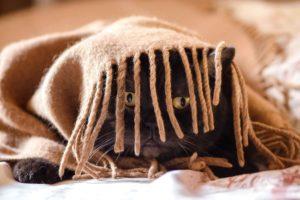 Il micio si nasconde sotto la coperta