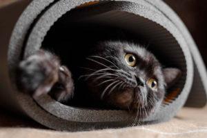 Il gatto nera che fa yoga