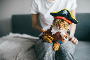 Il gatto travestito da pirata