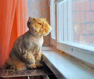 un micio buffo guarda dalla finestra