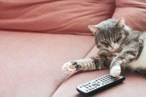 Il gattino cambia canale alla tv