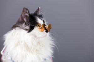 Il gatto con gli occhiali