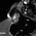 uno scatto artistico con un micio tutto nero