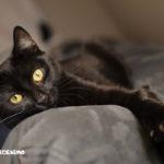gatto nero immagini