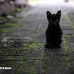 foto di un gattino nero per strada