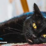 immagini di gatti neri
