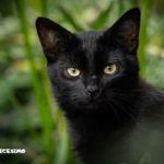 foto di gatti neri in mezzo alla natura