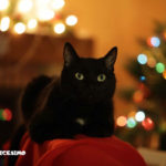 foto gatti neri