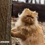 immagine di un gatto persiano vicino a un albero