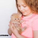 una foto di gatto persiano con una bambina