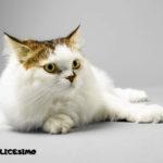 foto di gatto persiano bianco sul pavimento