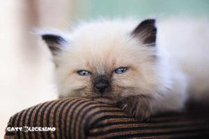 foto dei gattini appena nati
