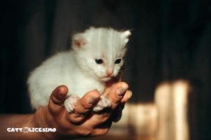 immagini gatti appena nati