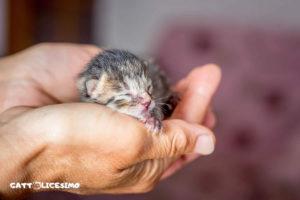 foto gattini appena nati
