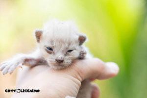 Un cucciolo di gatto appena nato