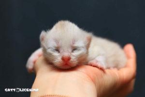 un piccolo gattino appena ato
