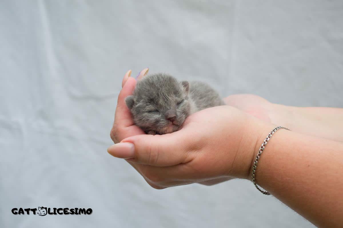 un micio nato da poco